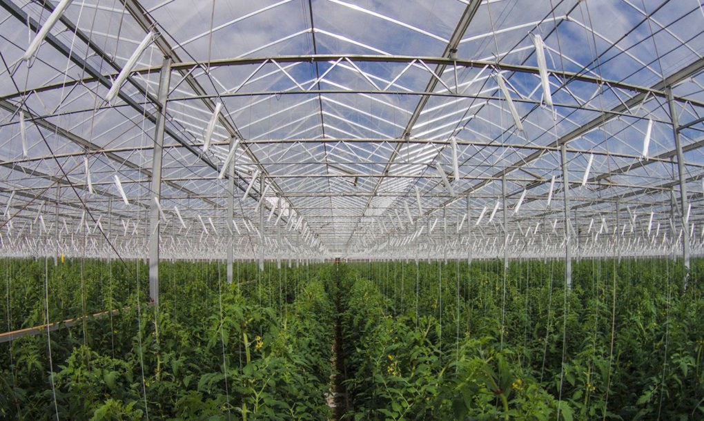 Sundrop-Farms-Greenhouse-1020x610