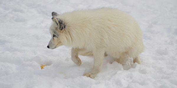 arctic-1694813_960_720