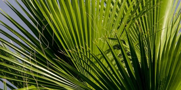 fronds-623688_960_720